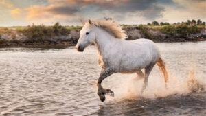 אל תהיו סוסים…