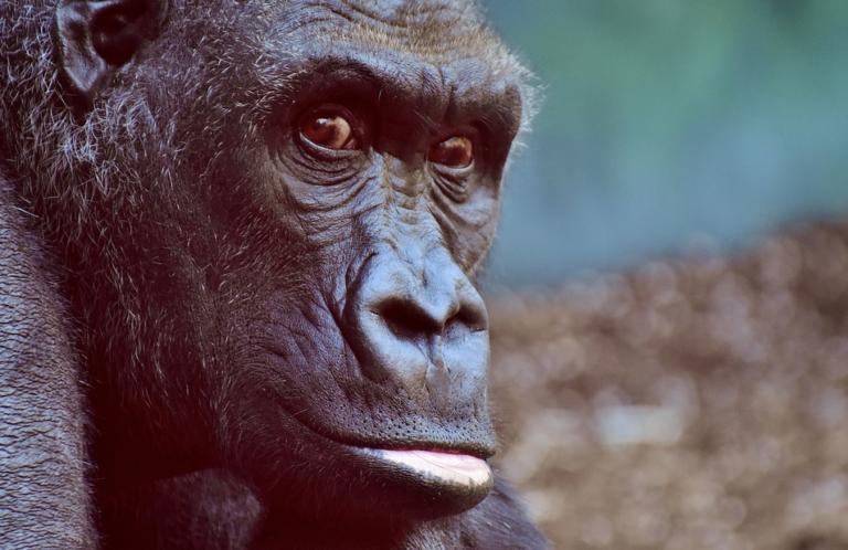 תיאוריית האבולוציה? לא מה שחשבתם…